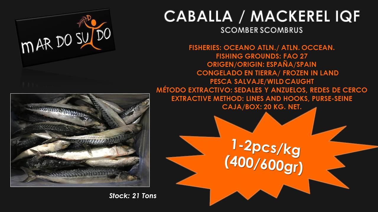 Oferta Destacada de Caballa - Mackerel Special Offer, Tamaño / Size 1-2pcs/kg