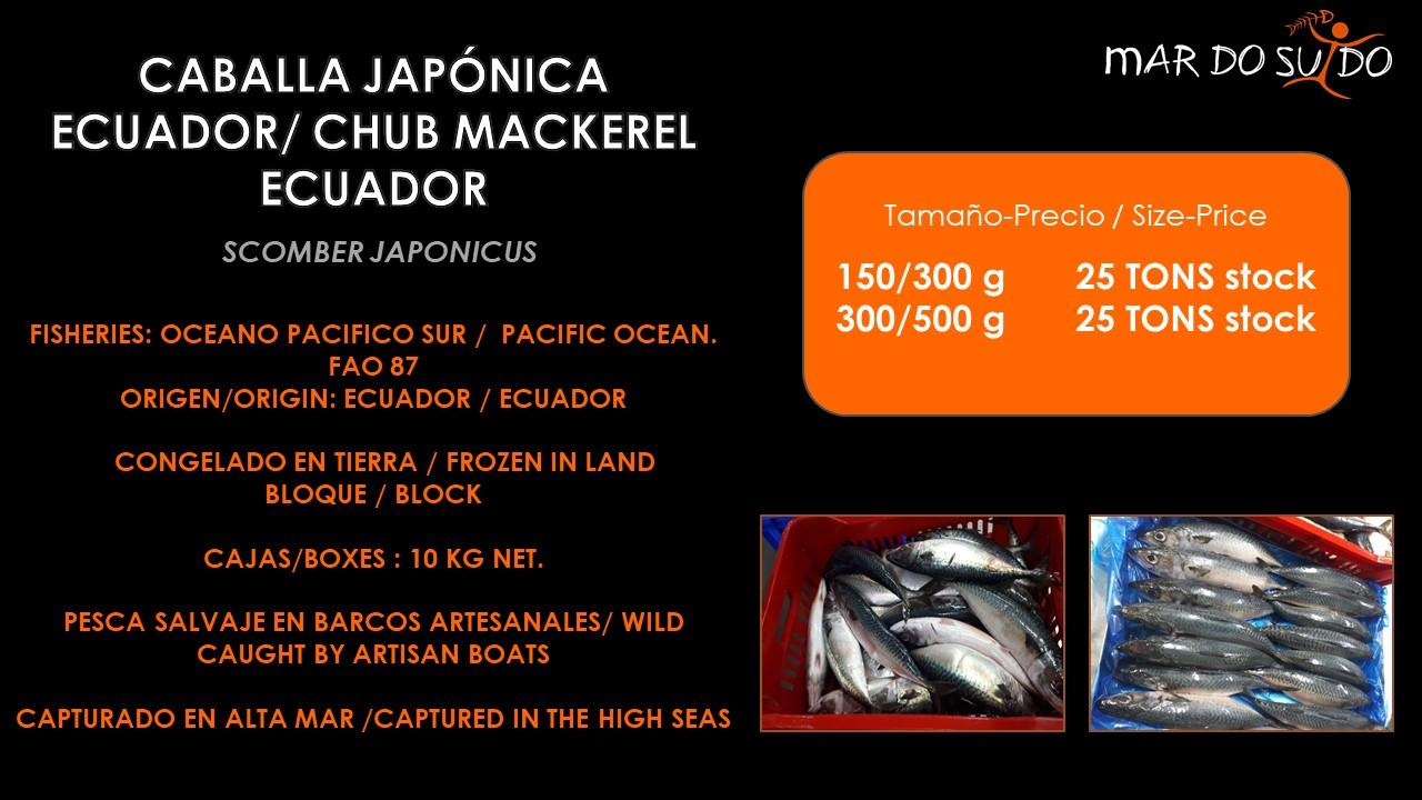 Oferta Destacada de Caballa Japónica Ecuador - Chub Mackerel Ecuador Special Offer