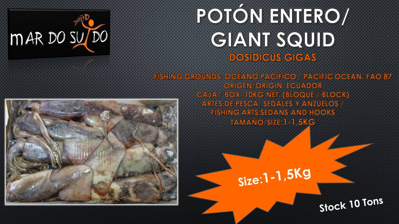 Oferta Destacada de Potón - Giant Squid Offer