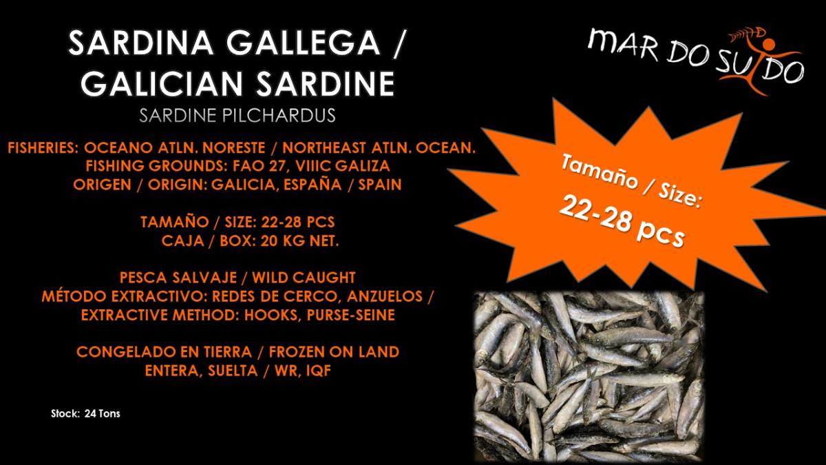 Oferta Destacada de Sardina Gallega- Galician Sardine Special Offer