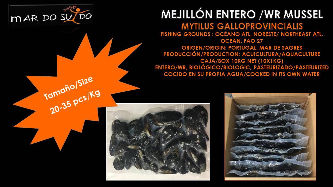 Oferta Destacada de Mejillón - Mussel Special Offer