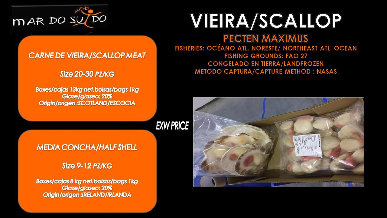 Oferta Destacada de Vieira / Scallop Special Offer