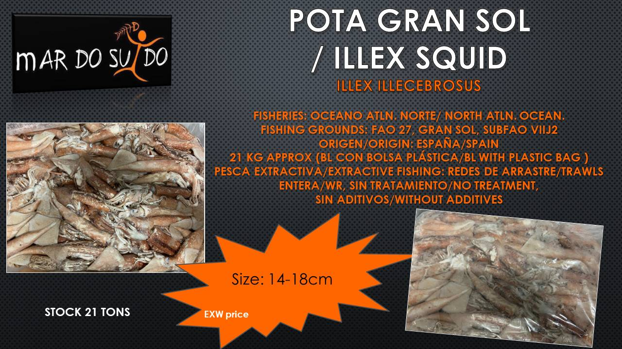 Oferta Destacada Pota Gran Sol / Ilex Squid Special Offer