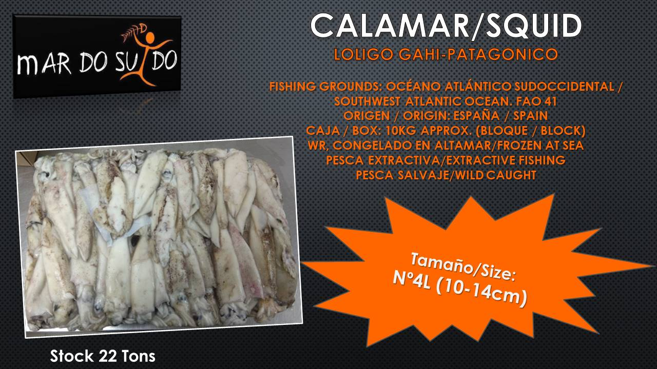 Oferta Destacada de Calamar - Squid Special Offer