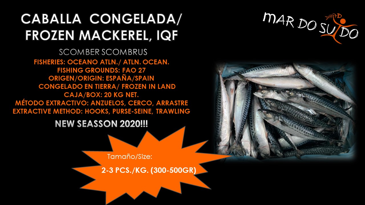 Oferta Destacada de Caballa - Mackerel Special Offer, Size 2-3 pcs/kg