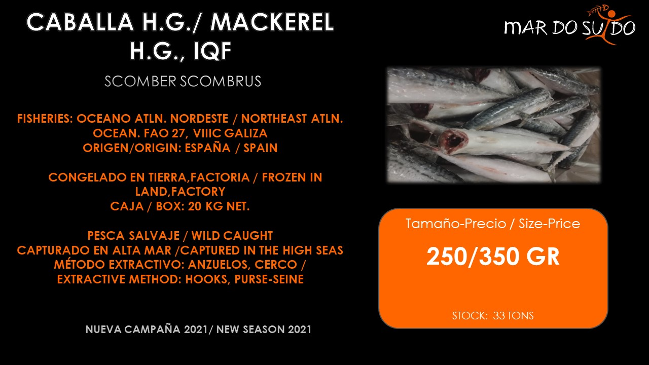 Oferta Destacada de Caballa H.G., IQF - Mackerel Special Offer, Size 250/350gr